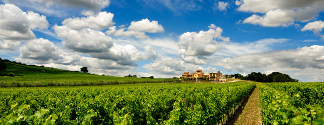 vino buono è tutto italiano